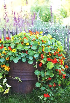 9 Knowing Cool Tricks: Easy Backyard Garden Kids shade garden ideas side of house.Budget Terrace Garden Ideas secret garden ideas how to make.Backyard Garden Planters Old Tires. Terrace Garden, Garden Pots, Garden Shrubs, Balcony Gardening, Potted Garden, Kitchen Gardening, Moon Garden, Water Garden, Herb Garden