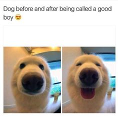 Way too cute.  funny pics, funny gifs, funny videos, funny memes, funny jokes. LOL Pics app is for iOS, Android, iPhone, iPod, iPad, Tablet