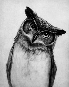 great horned owl black and white - Google Search