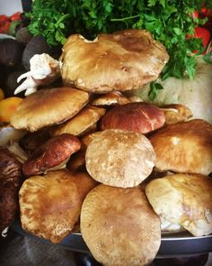 Fantásticos Boletus!! #boletus #cocinaespañola
