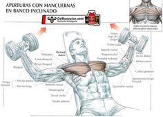 Apertura con mancuernas en banco inclinado. Más ejercicios en www.EJERCICIOS.demusculos.com