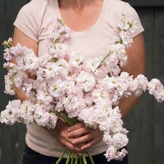 Glorious Enjoy Life With Your Own Flower Garden Beautiful Easy Ideas. Enjoy Life With Your Own Flower Garden Beautiful Easy Ideas. Stock Flower, Cut Flower Garden, Pink Garden, Flower Farm, Flower Gardening, Organic Gardening, Seed Packaging, Red Tulips, Cut Flowers