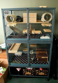 Chinchilla Cage Set-Up Chinchillas, Cute Ferrets, Cute Rats, Cage Chinchilla, Ferret Cage, Pet Ferret, Ferret Toys, Rat Toys, Pet Rat Cages