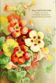 1920 - Ferry's seed annual, page