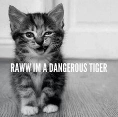 Looks like my Tiger cat as a kitten. Awww!