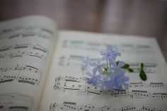 Music and flowers