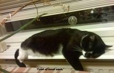 Guest Star: The Life of Kosmo Guest Cats #katzenworld ねこ cat cats cute 猫 funny guest cats ネコ katze katzen kawaii