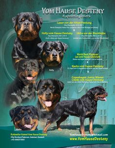 Rottweiler Kennel Vom Hause Desteny Villy Bernhard Pedersen Gedsted, Denmark +45-86637880 VomHauseDesteny@hotmail.com www.VomHauseDesteny