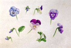 dianne sutherland artist   any particular areas of interest within the field of botanical art ...