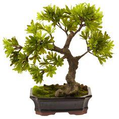 SIERRA ACCESSORIES Podocarpus w/Mossed Bonsai Planter, Green