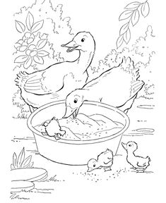 Farm animal coloring page | Ducks eating grain