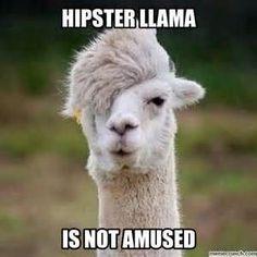 0542de6294f71db7556996c44195f7e1 emo meme hilarious memes funny llama meme generator diy lol critters pinterest,Alpaca Meme Generator