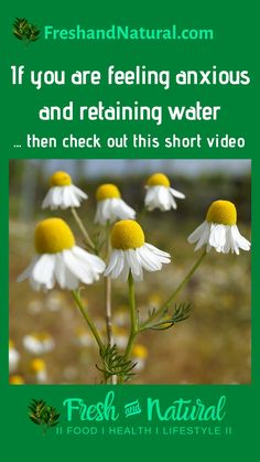 If you are feeling anxious and/or retaining water, then watch this short video... #shorts #FreshandNatural #HealthyEating #CleanFoods #alternativemedicine #naturalhealth #naturalremedies #healthfoods #healingteas #nutrition #greenliving #sustainableliving #sustainability #wholisticliving #naturalhealing #herbalhealing #story #chamomile #insomnia #edema Health Heal, Health And Wellness, Retaining Water, Alternative Medicine, Insomnia, Natural Healing, Anxious, Sustainability, Natural Remedies