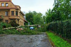 Spadlý strom na ulici Pasecká nad dětským domovem v Jablonci<br />Autor: Roman Kopáček
