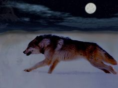 alone on a cold, winter's night in the moonlight...