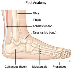 Just 3 Minutes To Gain What Are Foot Fractures
