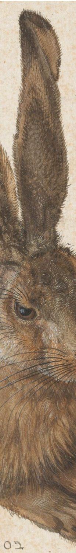 Hare (or Field Rabbit), by Albrecht Durer.