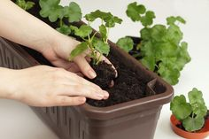 Organic Gardening The Natural No Dig Way Garden Gates, Herb Garden, Neem Oil, Enchanted Garden, Growing Vegetables, Organic Gardening, Herbs, Cucumber, Green