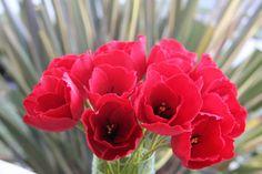 Tulips Red Crepe paper flowers  Valentine by FlowerBazaar on Etsy, $60.00
