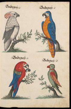 Aquarelle von Säugetieren, Vögeln, Insekten und Pflanzen samt deutschen Legenden - Zentralbibliothek Zürich