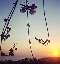 Full-bloom sun sets on another fine summer weekend in Laguna Beach.