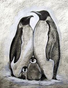 Realistic Drawings This will be my next tattoo Mama Penguin, Daddy Penguin and two baby penguins = my family Penguin Drawing, Penguin Art, Penguin Sketch, Penguin Watercolor, Pinguin Illustration, Pinguin Tattoo, Animal Drawings, Art Drawings, Drawing Animals
