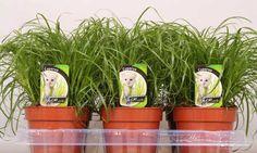 Etiketten Stolk kwekerijen