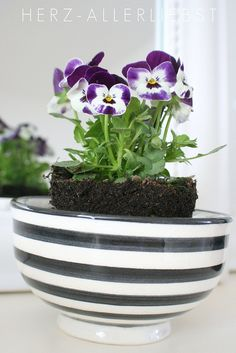 Indoor garden, so cute...select gorgeous bowl, pop a small house plant in the bowl for lovely presentation