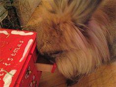 Mmmm...Timoteidrops mmmmm.....!!! / Mmmm Timothy candy !!! 2013 Dexter/IJ