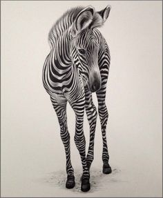 Julie Rhodes, original wildlife art, wildlife pencil drawings, wildlife prints…