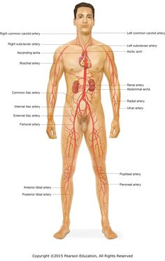 Human body parts names in english with picture 2015 stuff to buy learning module ccuart