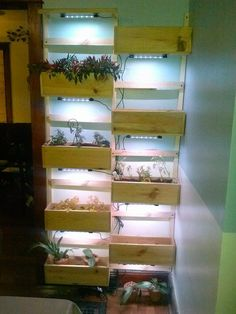 House Plant Maintenance Tips Living Wall Do It Yourself Home Projects From Ana White Wall Herb Garden Indoor, Herb Garden Planter, Herb Wall, Indoor Gardening, Herb Gardening, Indoor Farming, Herb Planters, Herbs Garden, Planter Ideas