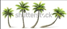 Ideas palm tree shadow plants for 2019 Free Vector Graphics, Free Vector Art, Free Vector Images, Image Vector, California Palm Trees, Palm Trees Beach, Palm Tree Pictures, Tree Images, Shadow Plants