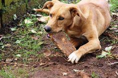 Appello del cane ALDO ABBANDONATO IN CANILE CERCA CASA DISPERATAMENTE