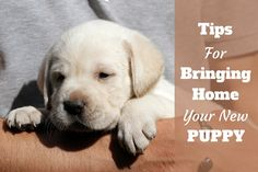 This article contains extensive information to help you when bringing home a new puppy, and how to start off your new lives in the best possible way.