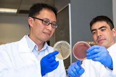 Worm infection may protect against inflammatory bowel diseases, according to a recent study, suggesting over-sanitizing everything is bad for health.