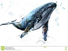 Image result for humpback whale watercolor