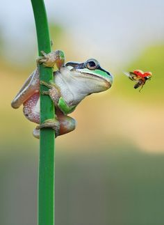 a frog and a ladybug ~ met on the way ~~~  said the frog to the ladybug ~ have a fine day !!