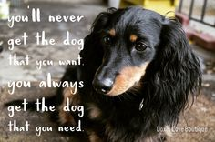 You always get the dog that you need #dogquotes