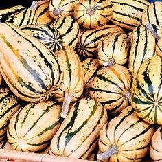 The skin of the Delicata Squash is thin, so no need to peel it. The moist yellow flesh is creamy, with notes of corn and sweet potato. #squash #autumn | Health.com