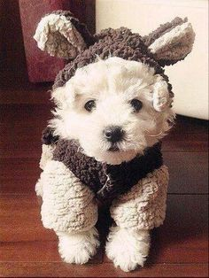 How cute is this very adorable dog and his cute winter sweater. 2 Bees in a Pod - Friday Faves - Winter Wonderland