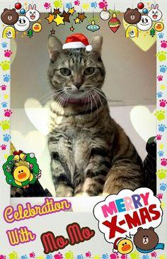 Merry Christmas & Happy New Year, My Friends!Y(^_^)Y