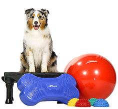 Canine Gym in a Box