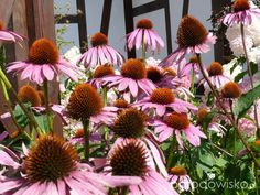 Ogród prawie romantyczny - strona 486 - Forum ogrodnicze - Ogrodowisko