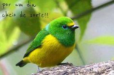 Green and yellow bird Pretty Birds, Love Birds, Beautiful Birds, Animals Beautiful, Birds 2, Wild Birds, Exotic Birds, Colorful Birds, Green Birds