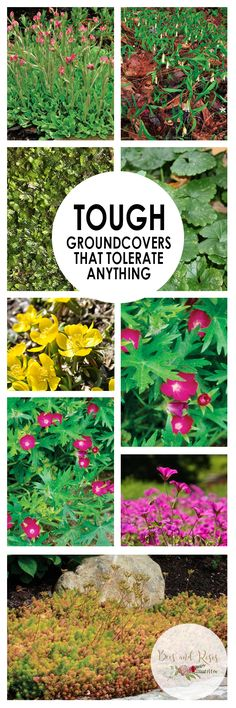 Tough Groundcovers That Tolerate ANYTHING