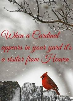 Image result for cardinal in snow saying