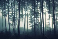 Check out the Sea of Trees Forest Mural Wallpaper, a minimal forest wallpaper design that will impress. With soft grey tones you can achieve a modern look. Forest Light, Foggy Forest, Misty Forest, Tree Forest, Tree Wallpaper Bedroom, Forest Wallpaper, Nature Wallpaper, Wallpaper Murals, Wood Wallpaper