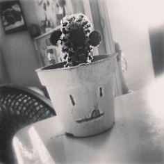 Gente que gosta de uma planta ☺❤