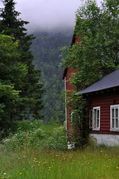 Blueberry Picking, Red Houses, Norwegian Wood, My Dream Home, Countryside, Folk, Cottage, Woods, Plants